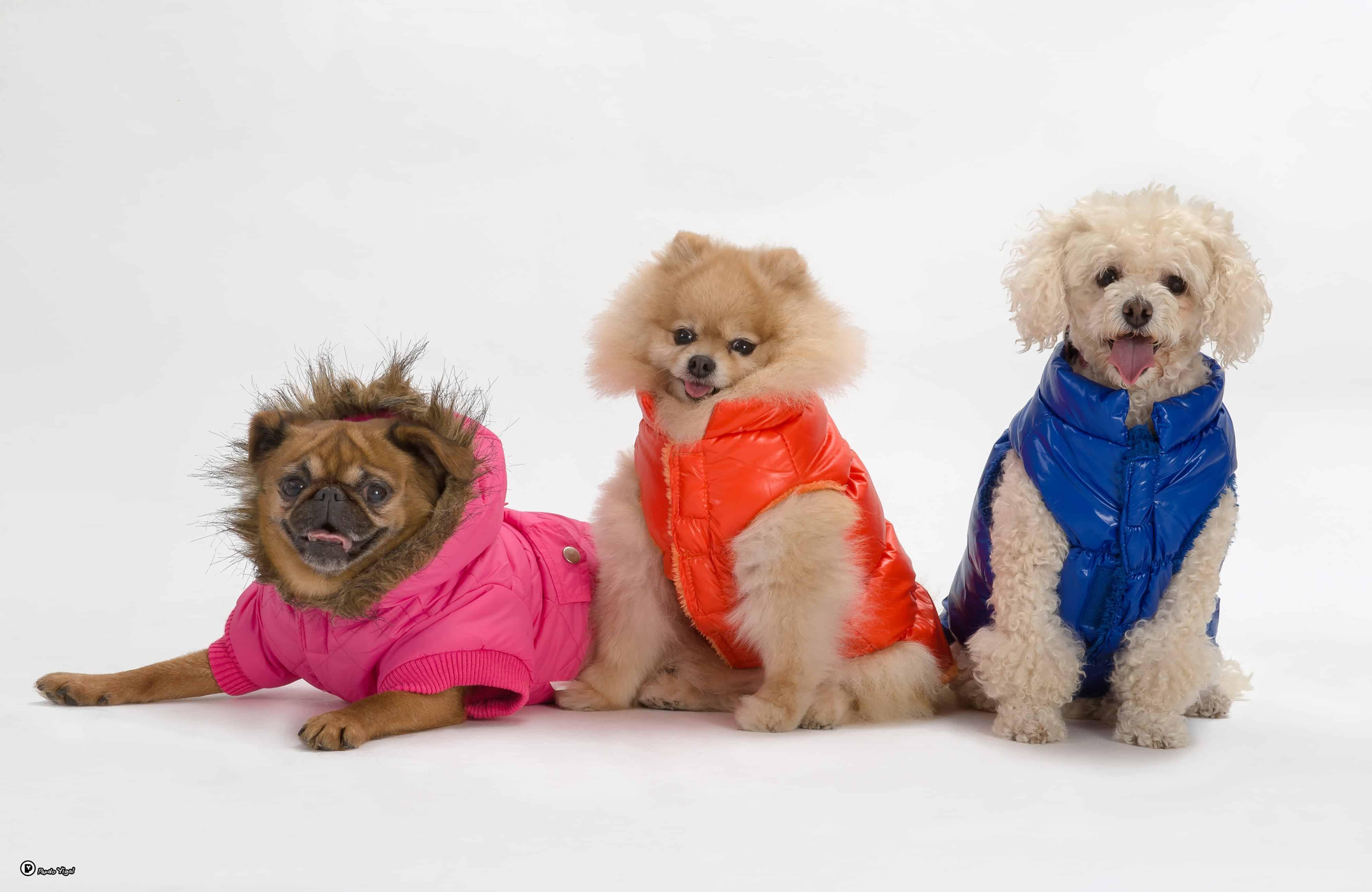 מותג הבגדים לכלבים ריבוס מבית ביופט מעילים לכלבים מחיר 79 שח צילום יגאל פרדו (1)